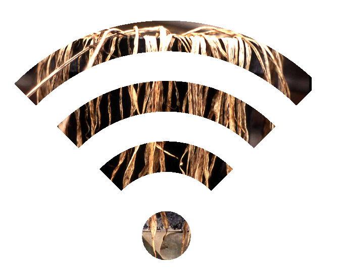 wifi-destruir-plantas
