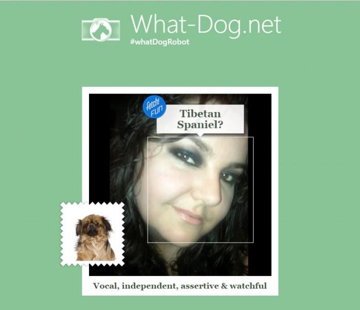 Microsoft lanza Fetch!, app para identificar perros