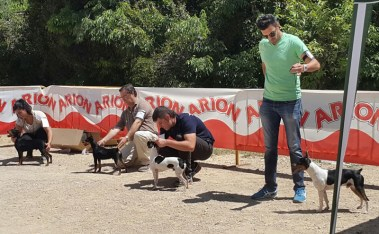 perros feria 4
