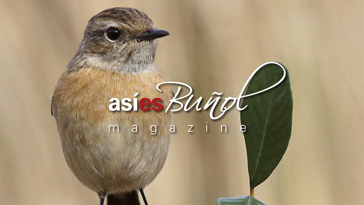 Revista Nº69 Diciembre 2020 Editorial