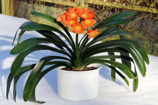 Опасные комнатные растения, которые мы зря сажаем в доме ...