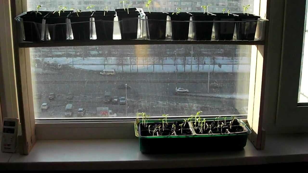 Plantele folosesc lungimile de undă roșie și albastră. Roșu este utilizat de plante pentru fotosinteză, iar albastru afectează creșterea plantelor. Acum, magazinele de grădină vând lămpi speciale care emit raze roșii și albastre de lumină. Nu este rău, dar dacă valoarea lor are o valoare pentru dvs., nu este rău să facă față sarcinii de iluminare suplimentară a plantelor lămpi de lumină obișnuită.