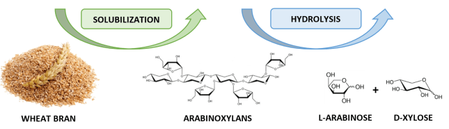 Figure 1. Conversion of arabinoxylans from wheat bran to arabinose + xylose