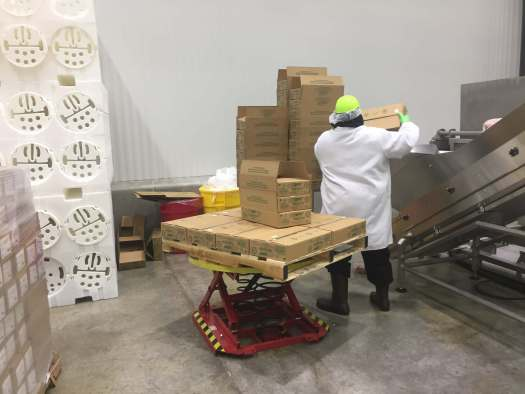 Worker is dumping sliced deli meats into vertical hopper that will transport packages to be loaded into HPP baskets