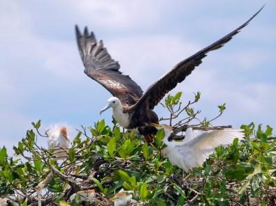 Kinderstube auf der Vogelinsel Isla Paloma