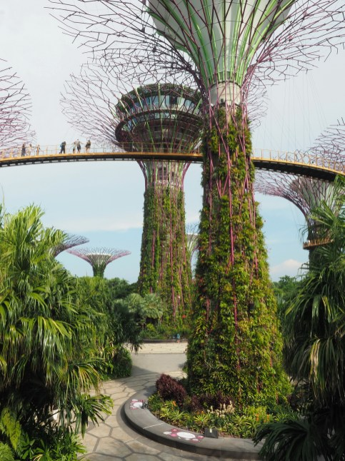 Gardens by the Bay: Super Tree Grove Skyway I