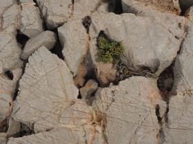 Castello: skurile Kalksteinformationen