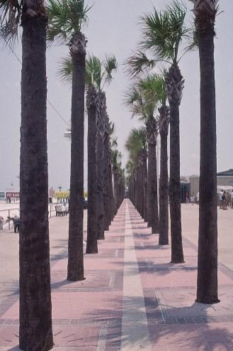 Florida 2000 25