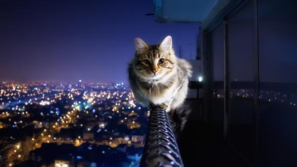 Животные, кот, кошки, темные, город обои для рабочего ...