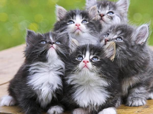 Черно белые котята обои для рабочего стола, картинки, фото ...