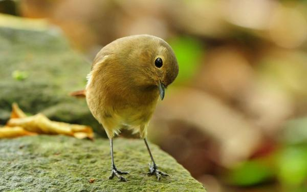 Птица, камень, птичка-невеличка обои для рабочего стола ...