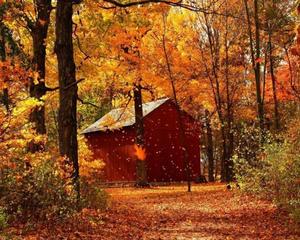 Золотая осень, домик, листопад обои для рабочего стола ...