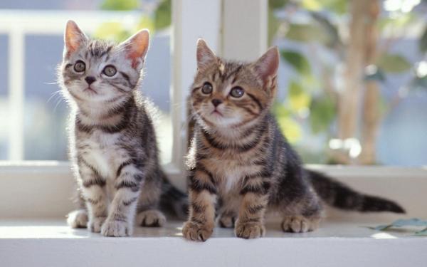 Котята, на, подоконнике обои для рабочего стола, картинки ...