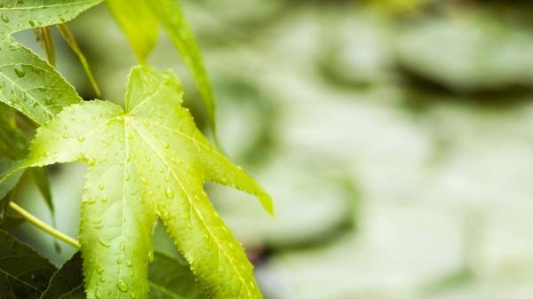 Капли, лист, зелень обои для рабочего стола, картинки ...