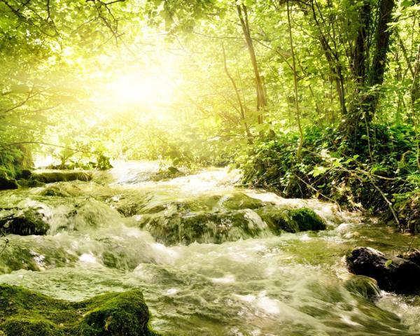Весенний лес обои для рабочего стола, картинки, фото ...
