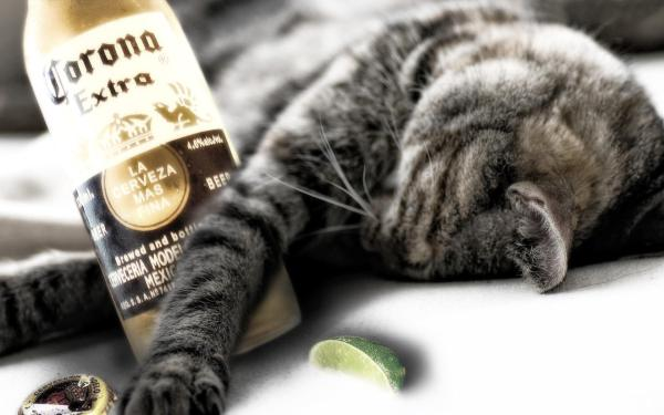Пьяный кот обои для рабочего стола, картинки, фото, 1680x1050.