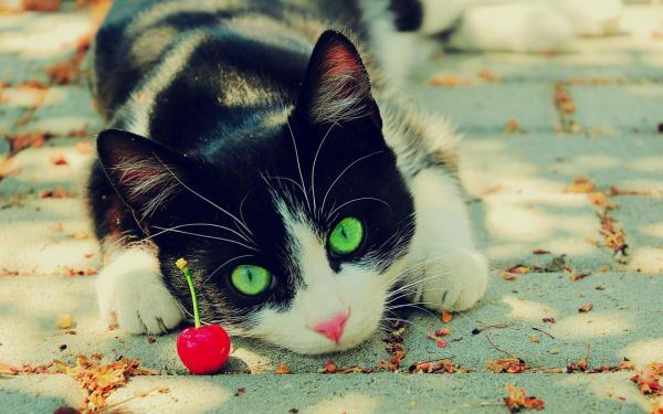 Зеленоглазый кот обои для рабочего стола, картинки, фото ...