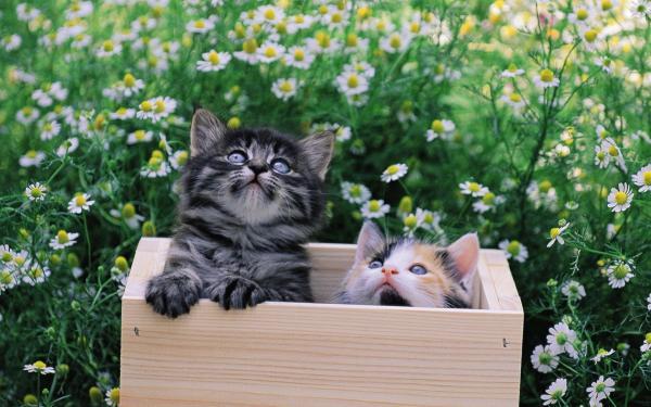 Котята в ящике обои для рабочего стола, картинки, фото ...