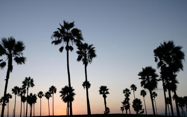 Высокие пальмы обои для рабочего стола, картинки, фото ...