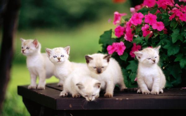 Котята, малыши, цветы обои для рабочего стола, картинки ...