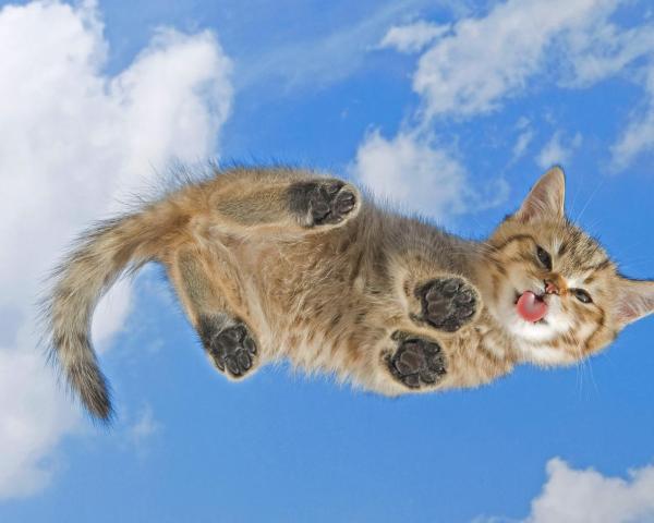 Котёнок облизывает экран Вашего монитора обои для рабочего ...