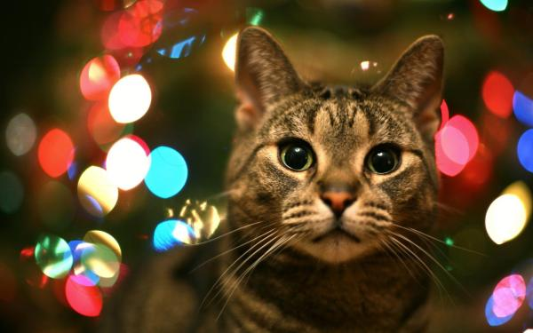 : любопытный кот обои для рабочего стола, картинки, фото ...