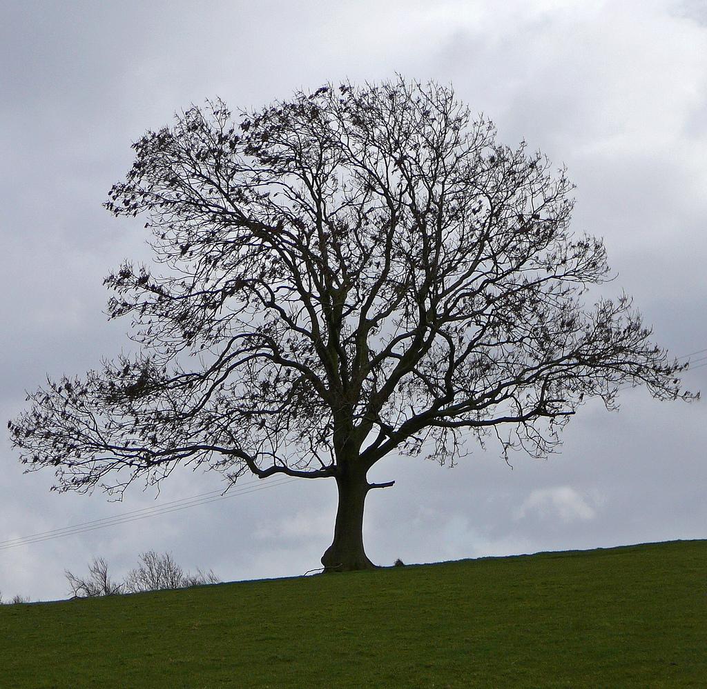 tree-pic