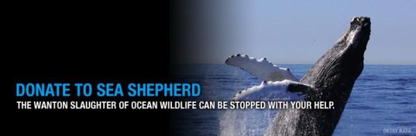 Sea Shepherd's Open Letter …. SeaWorld!! | It Is What It Is