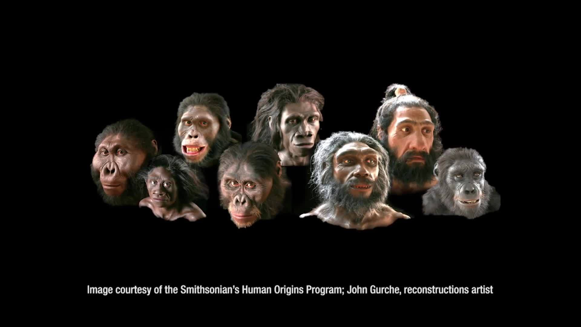 Human Evolution From The Beginning
