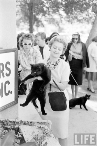 Кастинг чёрных котов (13)