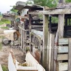 Pig pens on the river dam