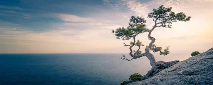 mindfulness-and-yoga