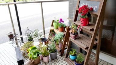 店内入口の植物