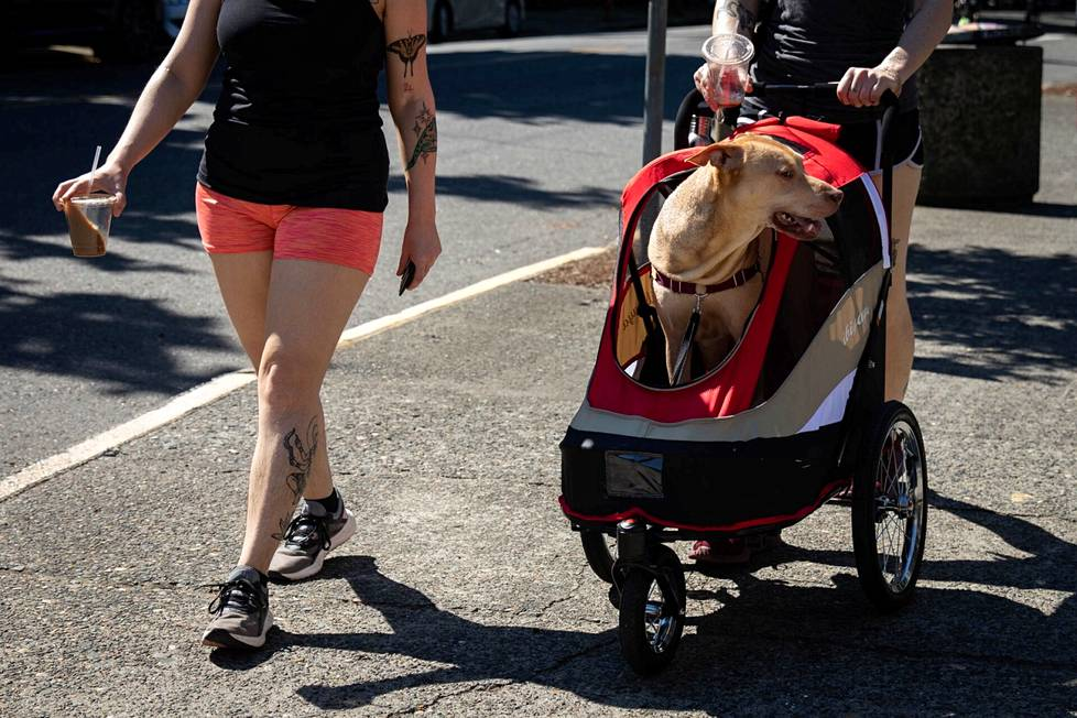 A dog suffering from the heat of the heatwave got a ride in a stroller in Portland, Oregon on Sunday.