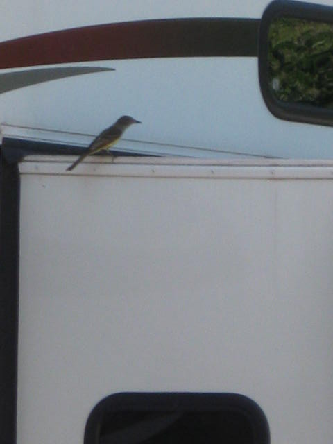 Bird perched on a Raptor (RV that is!)