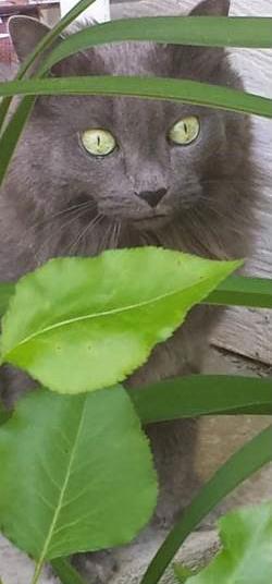 TNR outdoor cat on porch