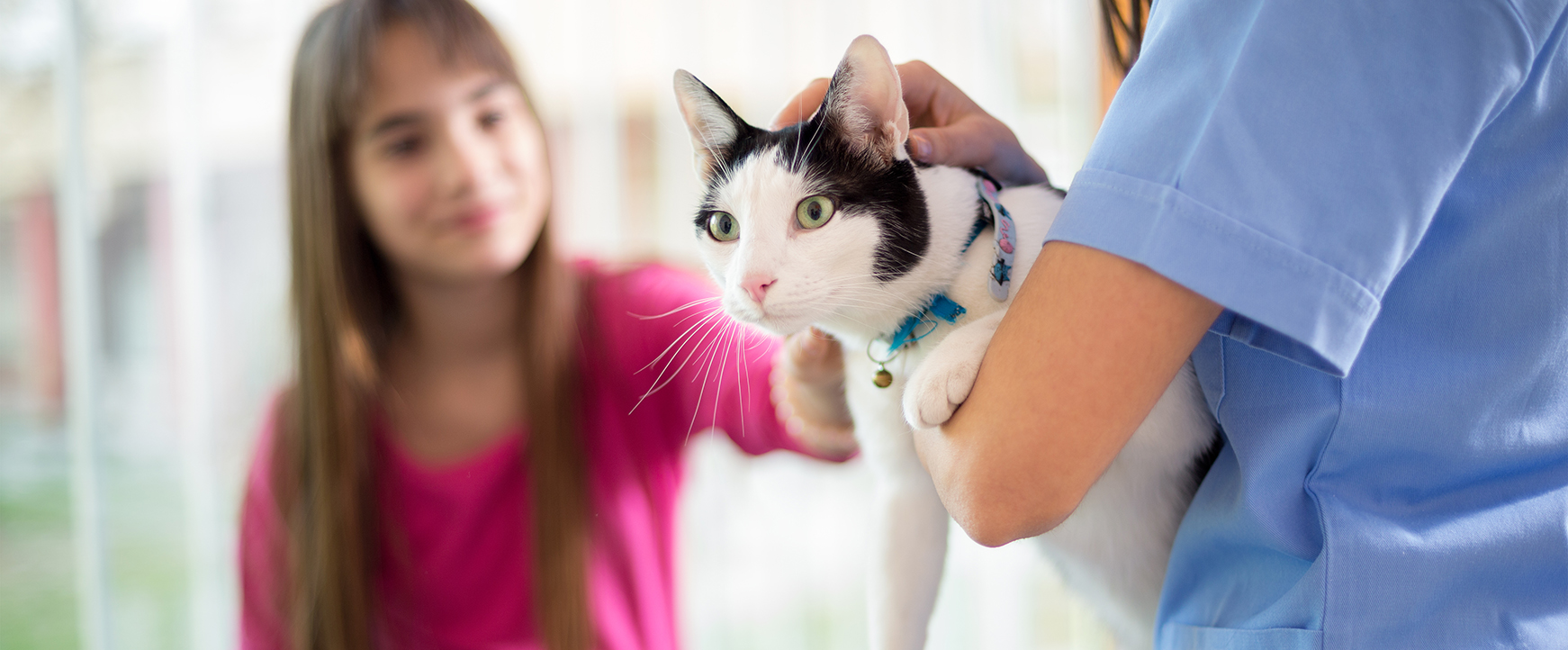 Cat with girl in vet clinic