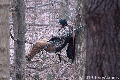 Contracted Ann Arbor deer cull sharpshooter