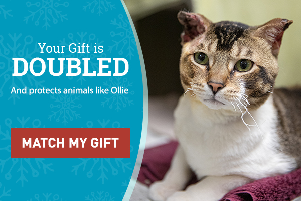 Your Gift is Doubled