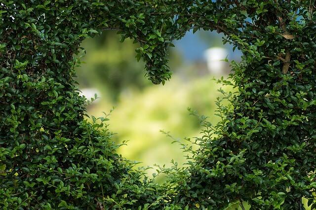 Liefde, verliefdheid en relatie: HSP versus de Narcist