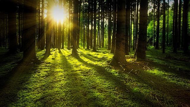 Natuur een weldaad voor HSP en hoogsensitieve personen, de voordelen