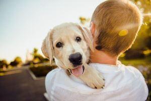 HSP en huisdieren