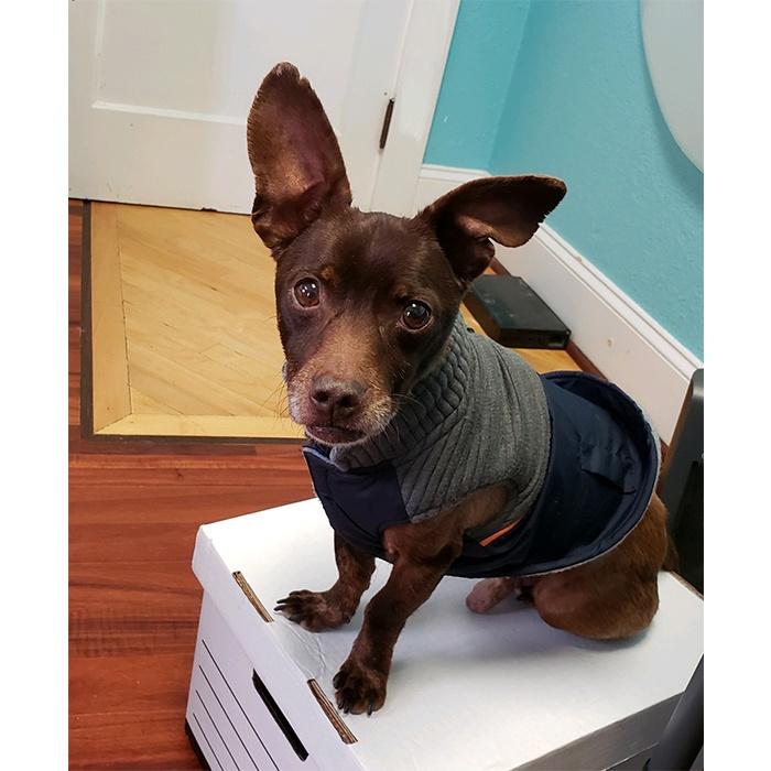 Banzai the rescue dog