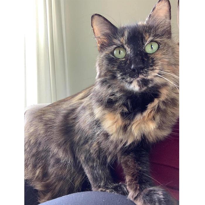 Jessie, adopt cat