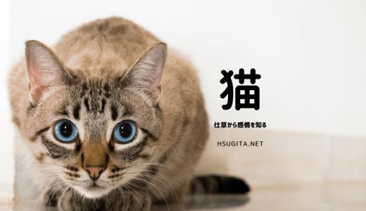 猫の感情を仕草から知る