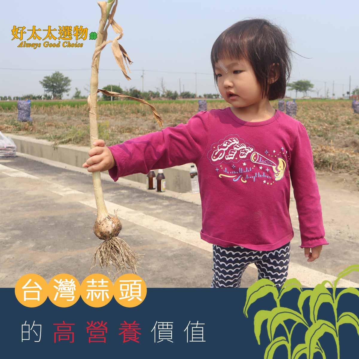 採訪當天,氣候涼爽,菲比也覺得在田裡玩沙和看阿婆剪蒜頭得好玩。
