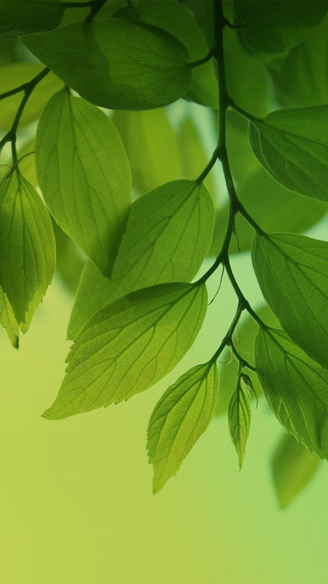 Fresh Green Leaves Htc One Wallpaper Best Htc One Wallpapers