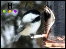 blog birds 2
