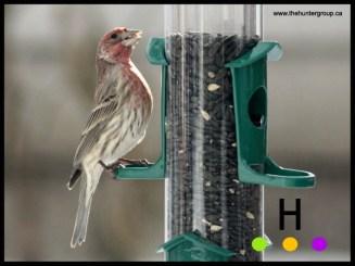 blog birds 4