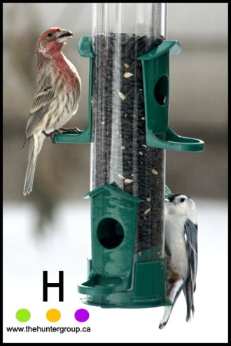 blog birds 6